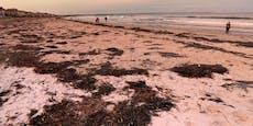 Millionen Leichen färben beliebten Sandstrand schwarz