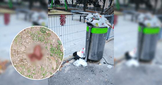 Kot, Müll, Essensreste – der Carsonypark im 11. Bezirk wird vollkommen zugemüllt.