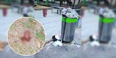 """Wienerin: """"Unser Park geht in Müll und Fäkalien unter"""""""