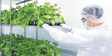 Gibt's bald einen Corona-Impfstoff auf Pflanzenbasis?