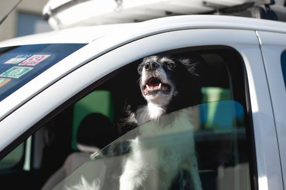 Auch für Hunde kann ein Auto bei Sommerhitze zur Todesfalle werden.