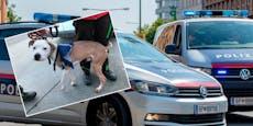 Wiener Polizei sprengt Drogen-Ring, rettet Hunde