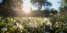 Pollenwarndienst mit zweithöchster Allergie-Warnung