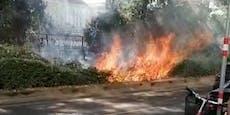 Feuerwehr kämpft gegen Heckenbrand in Wien-Leopoldstadt