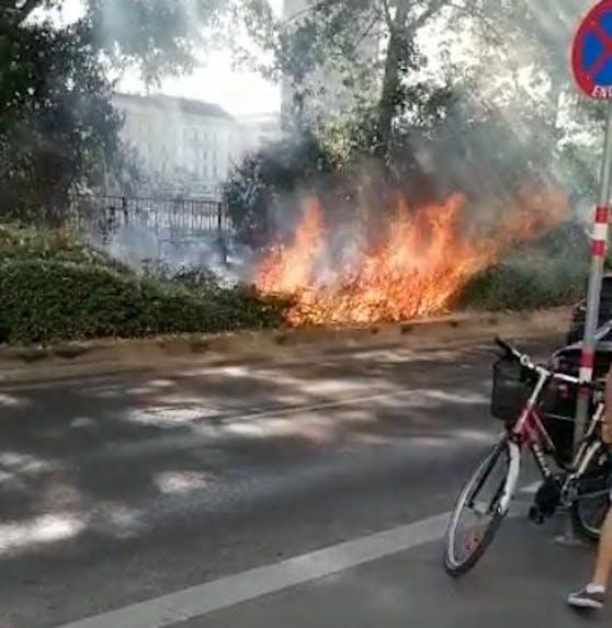Das Feuer griff auf Sträucher über.
