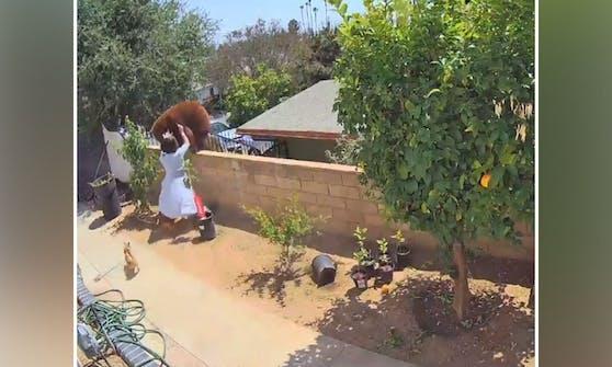 Unfassbar. Die zierliche Frau schupst doch tatsächlich die Bärenmutter wieder von der Mauer.
