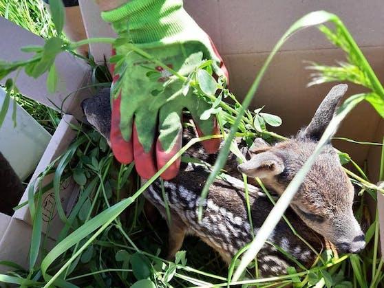 Die kleinen Kitze waren in der Wiese versteckt.
