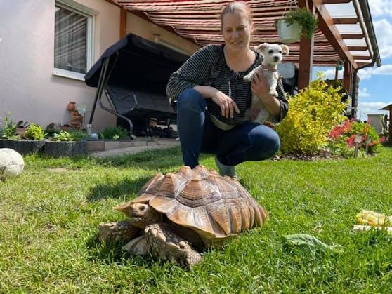 Diese Spornschildkröte wurde von dieser Dame gerettet.