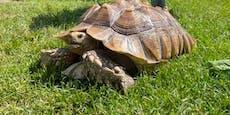 Schildkröte über sechs Jahre nur im Keller gehalten