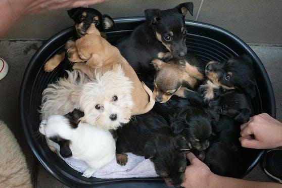Die Hundebabys werden im Tierheim Brunn liebevoll umsorgt.