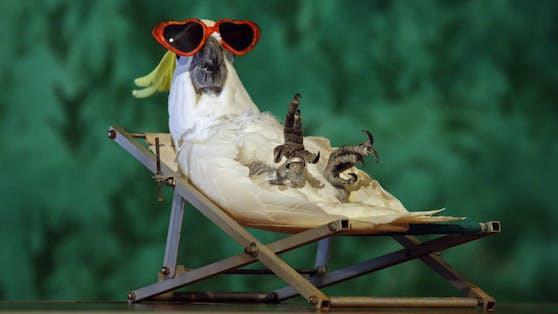 """(Kakadu) So trotzen die Tiere den """"Hundstagen""""."""