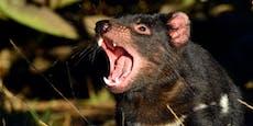 Naturschützer rotteten ganze Tier-Art aus