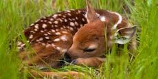 """Wer klebte """"Bambi"""" das Maul zu?"""