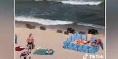 Sonne, Strand, Meer und... Wildschweine?