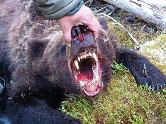 Der Bär wurde später vom Personal des Naturparks erschossen.