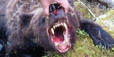 Bär attackiert Touristen-Gruppe und tötet 16-Jährigen