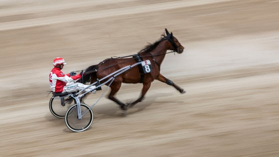 """(Symbolbild) Nach dem 136. Traberderby in der Wiener Krieau, musste Pferd """"Samuel"""" eingeschläfert werden."""