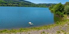 Flamingo im Wienerwaldsee sorgt für Aufsehen