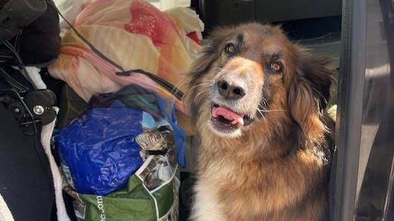 Hund starb in Auto fast den Hitzetod.