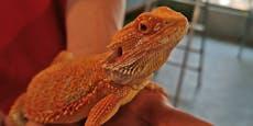 Nicht Hund und Katz' - nun werden Reptilien ausgesetzt