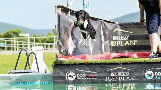 """Hoch hinaus und """"Platsch"""". Ein echter Spaß für die Wasserratten unter den Hunden: Dogdiving."""