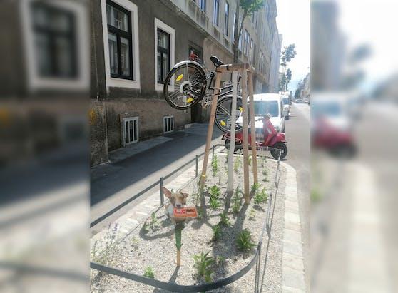 Ein Wiener hängte sein Rad auf einen Baum.