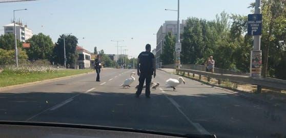 Die Polizei half den Vögeln in Wien.