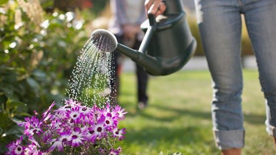 Rund ums Bewässern gibt es viele Mythen.
