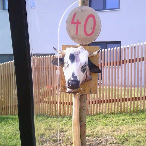 Ein bizarrer Brauch am Land: Kuhschädel zum 40er.