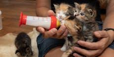 Wer will im Sommer auf süße Babykatzen aufpassen?