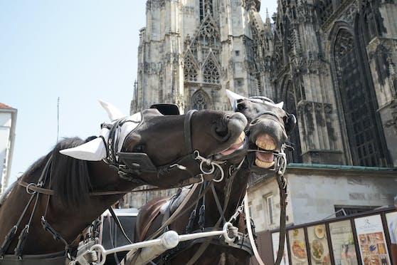 Die Pferde mussten bis zur Hitze-Spitze von 38 Grad am Stephansplatz ausharren.