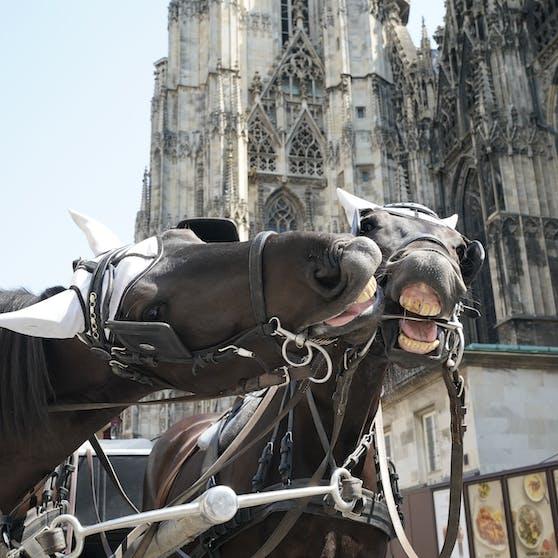 Fiaker-Kutscher mit seinen Pferden am Stephansplatz (City).