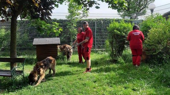 Die Mitarbeiter vom Tierschutzverein St. Pölten kümmern sich liebevoll um die Leonberger.