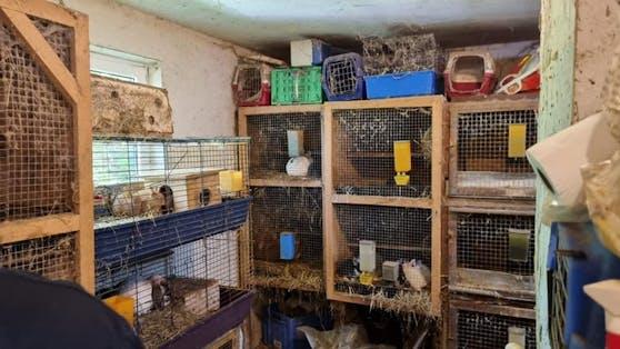 Eng zusammengepfercht saßen die Tiere in viel zu engen Käfigen.