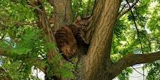 Florianis retteten zwei Stubentiger vom Baum
