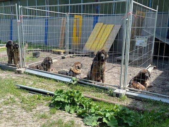 Die zehn Hunde waren in einem schlechten Zustand.