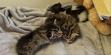 Babykatzen in Schachtel gesperrt und ausgesetzt