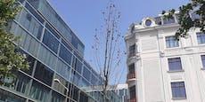 Bis zu 30.000 Euro: In Wien sterben teure Jungbäume ab
