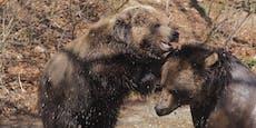 Bärenwald erhält zwei weitere Gehege