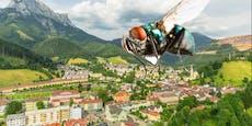 Fliegen-Plage – Anrainer wollen sogar Häuser verkaufen