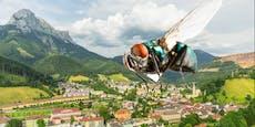 Steirische Gemeinde kämpft gegen Fliegenplage