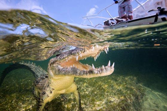 Eine Britin wurde in Mexiko von einem Krokodil angegriffen – ihre Zwillingsschwester rettete sie aus dem Rachen des Reptils. (Symbolbild)