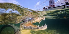 Horror-Trip: Frau rettet Schwester aus Krokodils-Maul