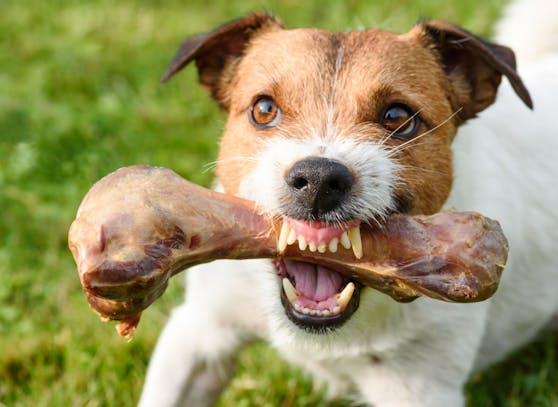 Manche Hunde neigen zur Ressourcen-Verteidigung. Nur warum ist das so?