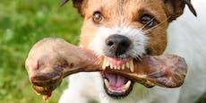 Mein Hund verteidigt sein Futter - was tun?