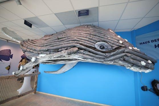 Künstler und Lehrer Peder Hill hat mit Wiener Schülern den fünf Meter langen Wal aus Plastikflaschen gestaltet.