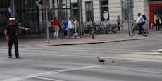 Polizei eskortiert Ente und Küken am Ring über Straße