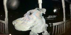 Hund wird Stunden lang vermisst - dann klingelt es