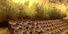 Polizei fasst Dealer: Haus für Cannabis-Anbau gemietet