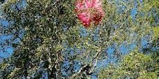 Hier hängt eine Paragleiterin (55) in einem Baum fest